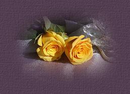 rosesroses2.jpg